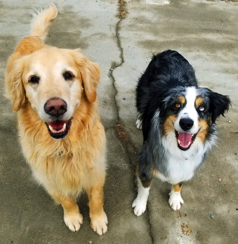 two happy dogs standing outside